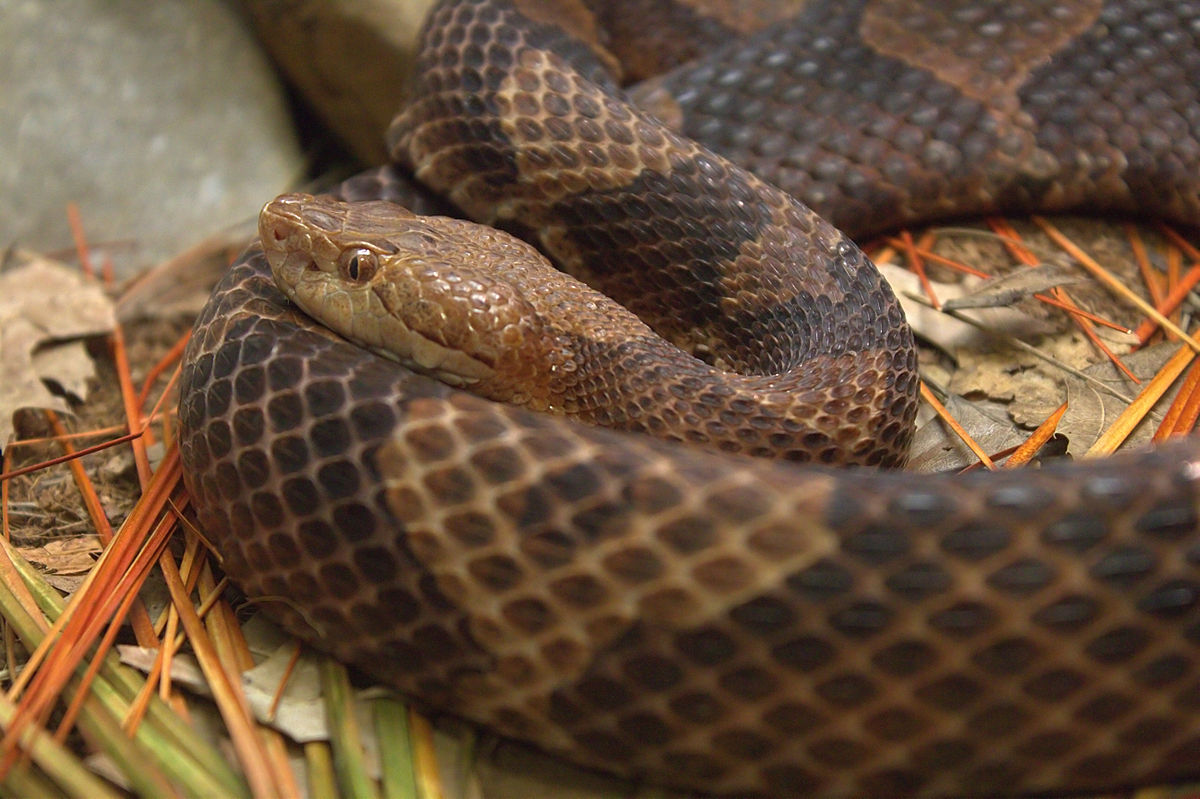 007-a-wild-snake-appeared